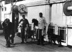 dogs-of-titanic-2-300x215